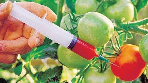 GM-crops